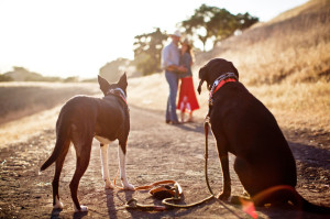 Borges_Dogs_looking_couple_hills_Lovelight_photo