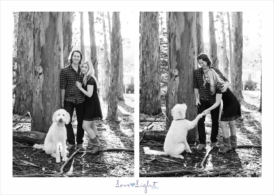 San Francisco engagement shoot eucalyptus labradoodle