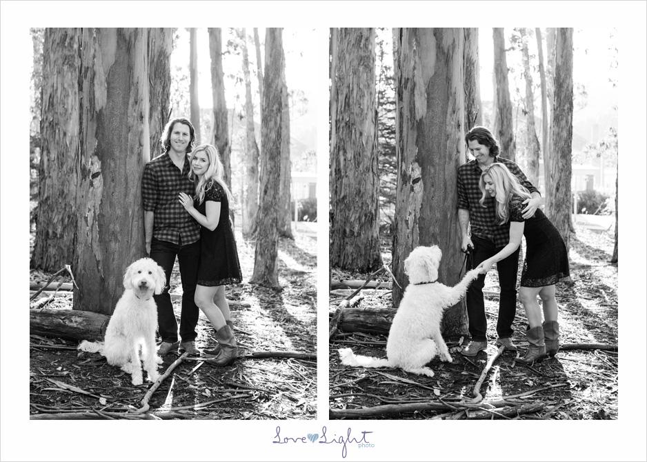 San Francisco engagement shoot eucalyptus labradoodle
